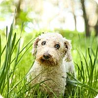 Adopt A Pet :: Stewart - Auburn, CA