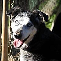 Adopt A Pet :: Sally - Chatham, VA