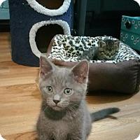 Adopt A Pet :: Lucky - COMING SOON - Taylor, MI