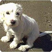 Adopt A Pet :: Lilly - dewey, AZ