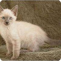 Adopt A Pet :: Bailey - Sacramento, CA