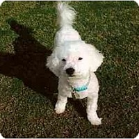 Adopt A Pet :: Jobe - Scottsdale, AZ