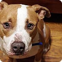 Adopt A Pet :: Kepler - Reisterstown, MD