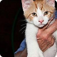 Adopt A Pet :: Mylo - New Egypt, NJ