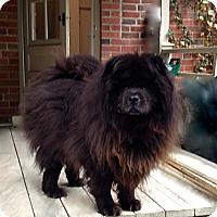 Adopt A Pet :: Harley and Nikita - Tillsonburg, ON
