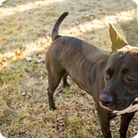 Adopt A Pet :: Mavis - Portland, OR