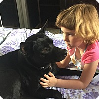 Adopt A Pet :: Carrie - Surrey, BC