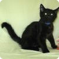 Adopt A Pet :: Phantom - Powell, OH