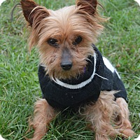 Adopt A Pet :: Dolly - Prole, IA