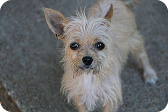 Terrier (Unknown Type, Small) Mix Dog for adoption in Bedminster, New Jersey - Grace