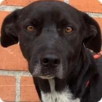 Adopt A Pet :: HOMER (video) - Los Angeles, CA