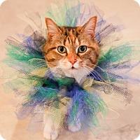 Adopt A Pet :: Rizzo - Princeton, MN