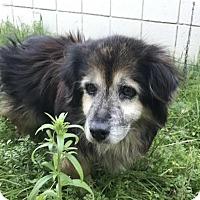 Adopt A Pet :: Brandy - Clayton, CA
