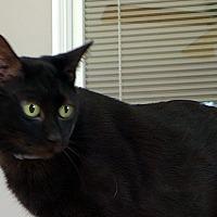 Adopt A Pet :: Yoda - Durham, NC