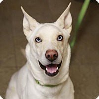 Adopt A Pet :: Buffy - Kettering, OH