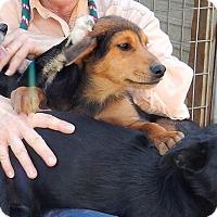 Adopt A Pet :: *Big Mac - PENDING - Westport, CT