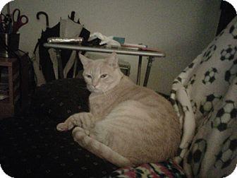 Domestic Shorthair Cat for adoption in Laguna Woods, California - Emergency Link