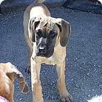 Adopt A Pet :: CARSON - Atascadero, CA