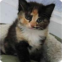 Adopt A Pet :: Heather - Cincinnati, OH