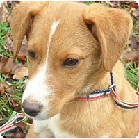 Adopt A Pet :: Lance - Covington, KY
