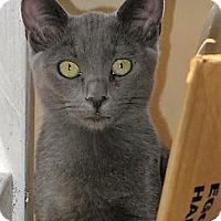 Adopt A Pet :: JAYDA - Woodland Hills, CA