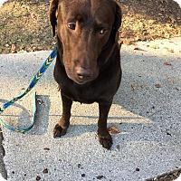 Adopt A Pet :: Mabel - Huntsville, AL
