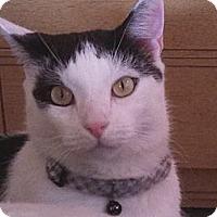Adopt A Pet :: Indy - Springfield, PA
