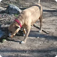 Adopt A Pet :: Fawn - Tiptonville, TN