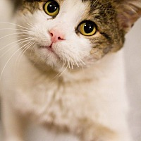 Adopt A Pet :: Demetrius - Grayslake, IL