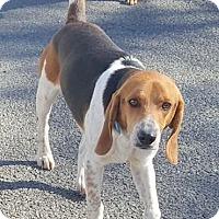 Adopt A Pet :: Trooper - Lexington, MA