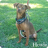 Adopt A Pet :: Howie - Laplace, LA