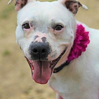 Adopt A Pet :: Maggie - Kansas City, MO