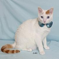 Adopt A Pet :: Loki - Kerrville, TX