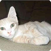 Adopt A Pet :: Ralphie - Davis, CA