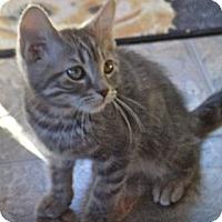 Adopt A Pet :: Gino - Escondido, CA