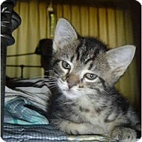 Adopt A Pet :: Bonnie - Davis, CA