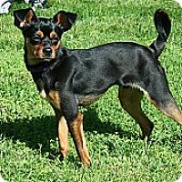 Adopt A Pet :: Bruiser - Hamilton, ON