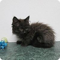 Adopt A Pet :: Yogi - Norwich, NY