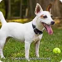 Adopt A Pet :: Xena - Conyers, GA
