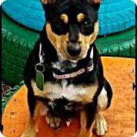 Adopt A Pet :: Ace - Bastrop, TX