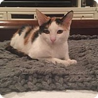 Adopt A Pet :: Zoe - Mission Viejo, CA