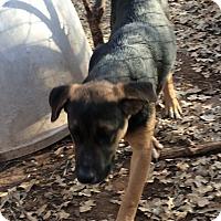 Adopt A Pet :: Alex - Blanchard, OK