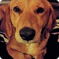 Adopt A Pet :: Bernice~adopted! - Glastonbury, CT