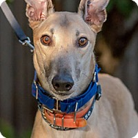 Adopt A Pet :: Kerr - Walnut Creek, CA