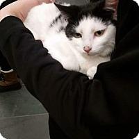 Adopt A Pet :: Mt. Nimba - Columbus, OH