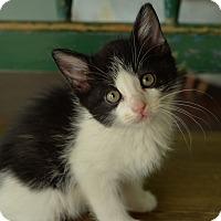 Adopt A Pet :: Oksana - San Antonio, TX