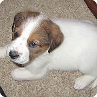 Adopt A Pet :: Alba - no longer accepting app - Manchester, NH