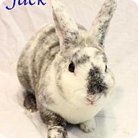 Adopt A Pet :: Jack - Bradenton, FL