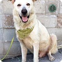 Adopt A Pet :: WOLF - pasadena, CA