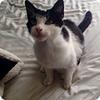Adopt A Pet :: Wilfred - Athens, GA